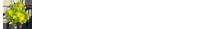 logo-massiv-aus-holz